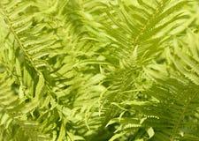 Fundo abstrato das folhas Imagens de Stock