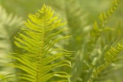 Fundo abstrato das folhas Foto de Stock Royalty Free
