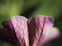 Fundo abstrato das pétalas da flor Fotografia de Stock Royalty Free
