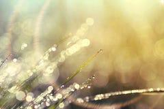 Fundo abstrato de brilhar um orvalho brilhante da manhã foto de stock royalty free