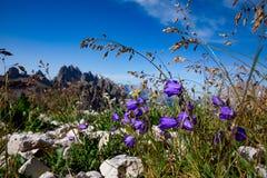 Fundo abstrato de flores alpinas Fotografia de Stock Royalty Free