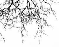 Fundo abstrato de Halloween Ramo preto da árvore em um b branco Foto de Stock Royalty Free