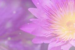 Fundo abstrato de lótus roxos Fotografia de Stock Royalty Free