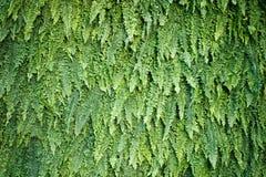 Fundo abstrato de samambaias e das folhas verdes Fotos de Stock
