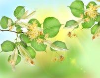 Fundo abstrato de um jardim do linden Foto de Stock Royalty Free
