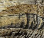 Fundo do sumário da grão da casca de árvore Fotografia de Stock