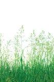 Fundo abstrato detalhado da grama de prado, grande close up macro isolado detalhado, espaço vertical da cópia fotografia de stock