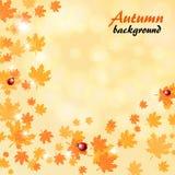 Fundo abstrato do amarelo do outono com folhas de bordo ilustração stock