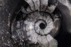 Fundo abstrato do amonite fotografia de stock