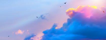 Fundo abstrato do céu da mola; pássaros do voo em nuvens cor-de-rosa fotografia de stock royalty free