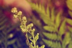 Fundo abstrato do fern Imagem de Stock