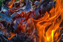 Fundo abstrato do fogo, carvões, chamas e elementos da torção da cinza imagem de stock