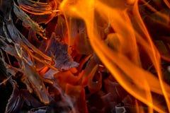 Fundo abstrato do fogo, carvões, chamas e elementos da torção da cinza foto de stock