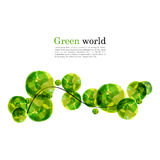Fundo abstrato do vetor com ramo e elementos verde-claro para o projeto Fotos de Stock