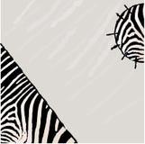 Fundo abstrato do vetor da zebra Imagens de Stock Royalty Free