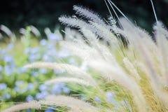 Fundo abstrato falado sem pensar e grama da flor, luz solar do campo e Fotos de Stock Royalty Free