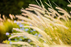 Fundo abstrato falado sem pensar e grama da flor, luz solar do campo e Foto de Stock Royalty Free