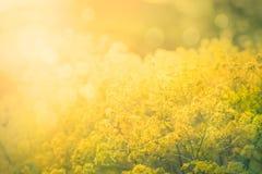 Fundo abstrato floral fotografia de stock royalty free
