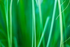 Fundo abstrato gramíneo verde bonito Fotos de Stock Royalty Free