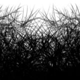 Fundo abstrato preto e branco com linhas das máscaras de ramos das plantas foto de stock