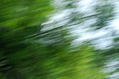 Fundo abstrato verde Foto de Stock Royalty Free