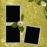 Fundo abstrato verde com frames Foto de Stock