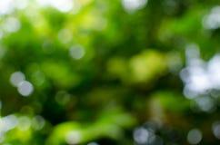 Fundo abstrato verde do bokeh foto de stock royalty free