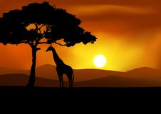 Fundo africano do por do sol com giraffe Foto de Stock Royalty Free