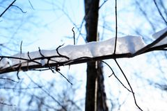 Fundo agradável do inverno Imagem de Stock Royalty Free