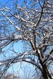 Fundo agradável do inverno Fotografia de Stock Royalty Free