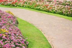 Fundo ajardinado do jardim, passagem concreta, grama verde e florescência decorativa colorida das flores imagem de stock