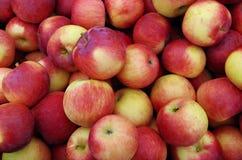 Fundo amarelo avermelhado das maçãs Foto de Stock Royalty Free