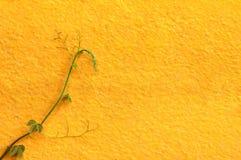 Fundo amarelo da parede Imagem de Stock