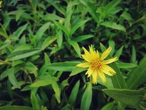 Fundo amarelo das folhas da flor e do verde Imagem no tom do vintage Imagem de Stock Royalty Free