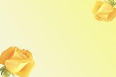Fundo amarelo das rosas Fotografia de Stock Royalty Free