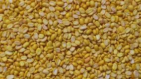 Fundo amarelo dos feijões de Mung, rotação