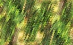 Fundo amarelo verde Fotos de Stock Royalty Free