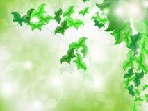 Fundo ambiental com as borboletas verdes da folha Fotografia de Stock Royalty Free