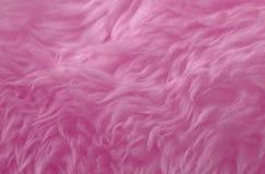 Fundo animal cor-de-rosa da textura de lãs Lãs naturais do matiz rosado Textura do close-up da pele macia do luxuoso imagem de stock royalty free
