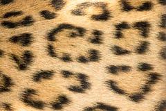 Fundo animal selvagem do teste padrão ou fim da textura acima fotos de stock royalty free