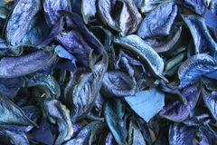 Fundo aromático seco das plantas Imagem de Stock Royalty Free