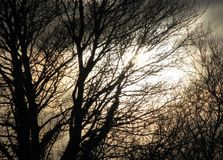 Fundo assustador borrado de árvores mostradas em silhueta e do céu tormentoso Fotos de Stock Royalty Free