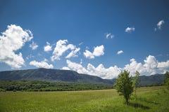 Fundo aventuroso bonito com árvores e montains no lado foto de stock royalty free
