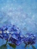 Fundo azul com flores do hydrangea ilustração royalty free