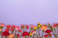 Fundo azul com flores dos cravos e espa?o da c?pia Vista superior fotografia de stock royalty free