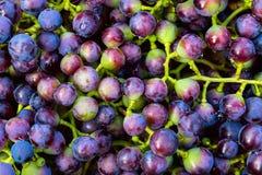 Fundo azul das uvas para vinho, uvas escuras, uvas vermelhas, uvas para vinho Fotografia de Stock