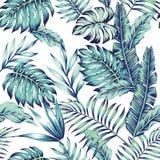 Fundo azul do branco da selva Imagem de Stock Royalty Free