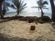 Fundo azul do mar com palmeiras Fotos de Stock Royalty Free