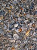 Fundo azul e cinzento das conchas do mar imagens de stock royalty free