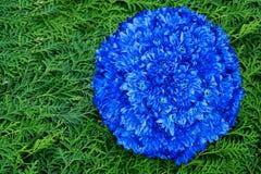 Fundo azul e verde bonito das flores Flores do áster Fotografia de Stock Royalty Free